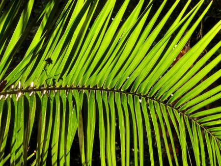 Palm Tree leaf Stock Photo - 5401418