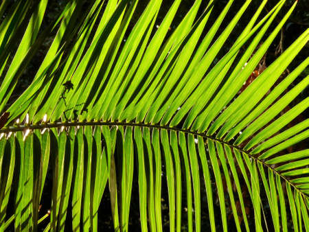 Palm Tree leaf Stock Photo
