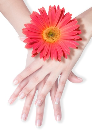 beautiful hands with daisy photo