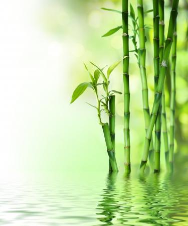 japones bambu: los tallos de bambú sobre el agua
