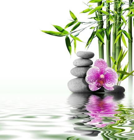japones bambu: orqu�dea p�rpura flor de bamb� finales sobre el agua