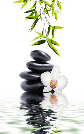 zen rocks: white orchid flower end bamboo