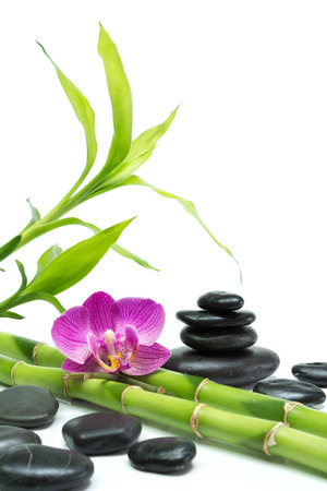 purple orchid with bamboo and black stones - white background  photo