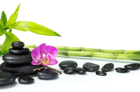 purple orchid with bamboo and many stones  photo