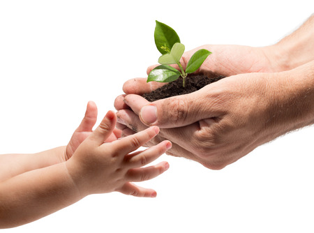 hand holding plant: hands of a child taking a plant from the hands of a man  Stock Photo