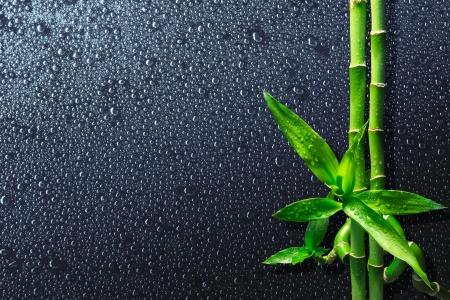 bambou: spa background - gouttes et le bambou sur le noir Banque d'images