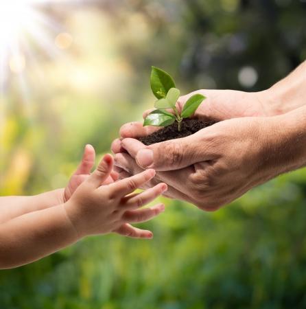 �cologie: mains d'un enfant tenant une plante des mains d'un homme - jardin