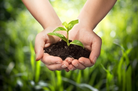 organic plants: plant in hands - grass background