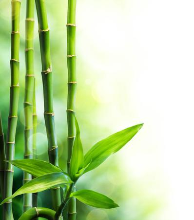 veel bamboe stengels en lichtstraal