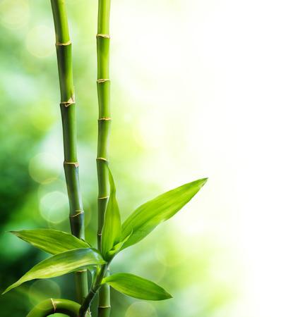 2 つの竹の茎と光をビームします。