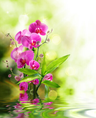 orchid branch: beautiful orchid and bamboo for border treatment spa on water  Stock Photo