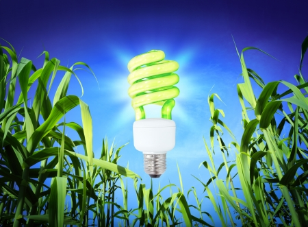 growth ecology - CF Lamp - green lighting  photo