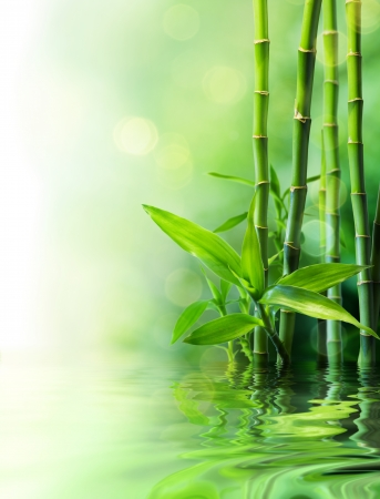japones bambu: los tallos de bambú sobre el agua - difumina Foto de archivo