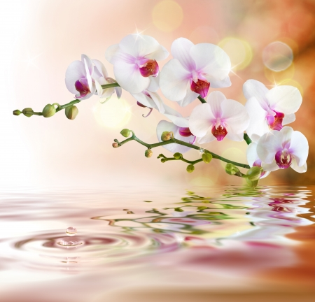 white orchids on water with drop Imagens - 25309227