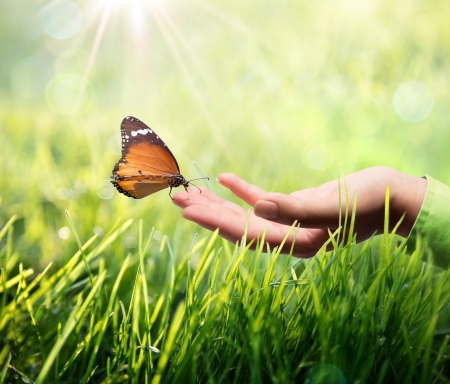 environment friendly: butterfly in hand on grass  Stock Photo
