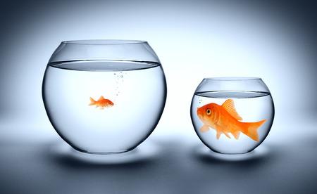 peces de colores: gran pez en un pequeño acuario - concepto superado Foto de archivo
