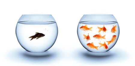 discriminacion: peces en la soledad - el concepto de diversidad, el racismo y el aislamiento Foto de archivo
