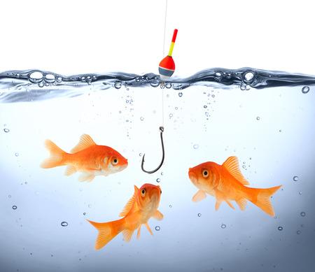 fishhook: goldfish in danger - concept deception