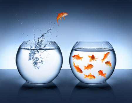 goldfish jump: goldfish jumping out of the water - alliance concept  Stock Photo
