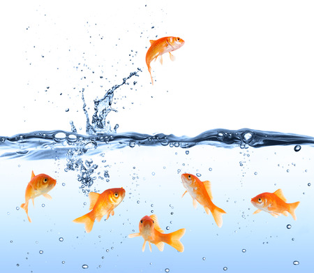 leap: goldfish looking for way out  Stock Photo