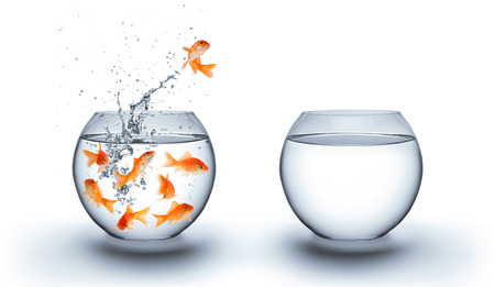 gold fish bowl: goldfish jumping out of the water - improvement concept - white