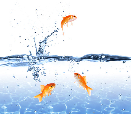 fish water: goldfish jumping out of the water - escape concept  Stock Photo