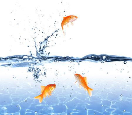 Poisson rouge sautant hors de l'eau - Escape Concept Banque d'images - 25944854