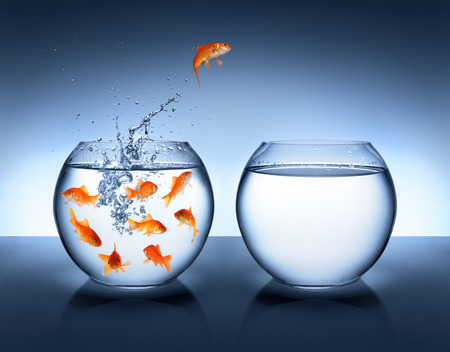 goldfish jumping - improvement and career concept 版權商用圖片 - 25944855