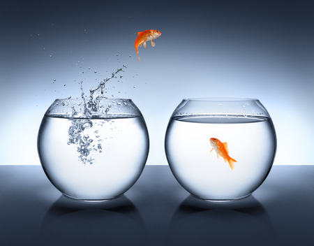 goldfish jumping out of the water - love concept  Stock Photo