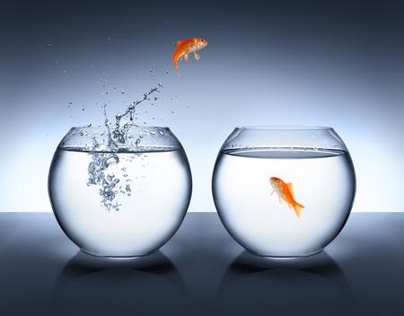 peces de colores: peces de colores saltando fuera del agua - concepto de amor Foto de archivo