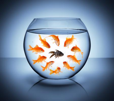 racismo: pescado negro - concepto de la diversidad, el racismo y el aislamiento
