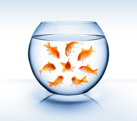 goldfish - diversity concept, bullying and isolation  photo