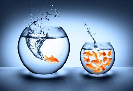pez de colores saltando - concepto de mejora