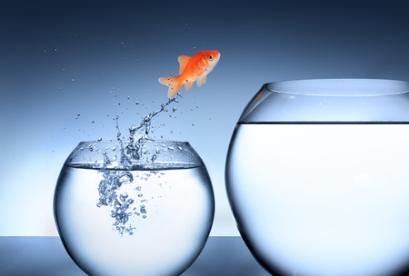 goldfish: rise and improvement concept  Stock Photo