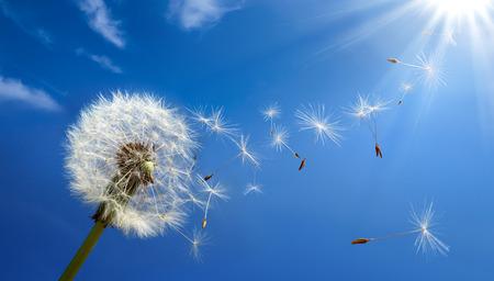 vent: concept de l'allergie au printemps