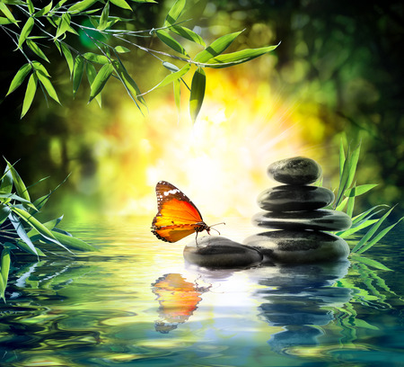 butterfly garden: delicate concept - butterfly on water in garden
