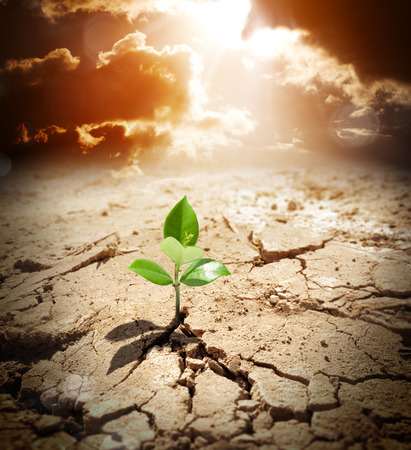 life change: plant in arid land - climate warming and drought concept  Stock Photo