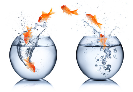 business change: goldfish - change concept - isolated