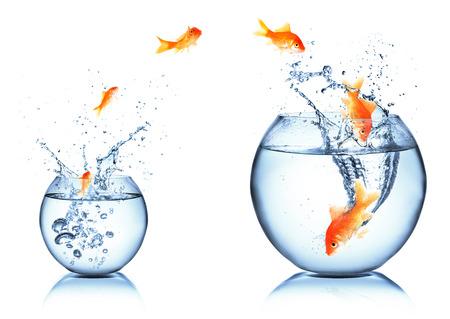 peces de colores: carrera y concepto de crecimiento Foto de archivo