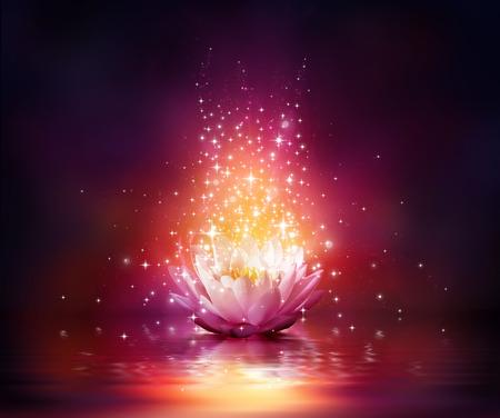 lirio de agua: flor mágica sobre el agua Foto de archivo