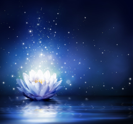 magic lily: magic flower on water - blue