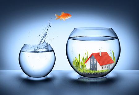 pez dorado: casa hallazgo peces - concepto de bienes raíces