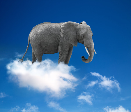 elephant in the clouds - lightness and fantasy concept  photo