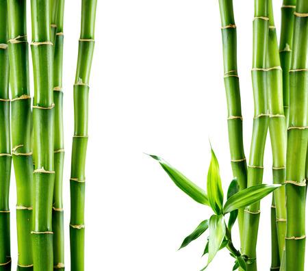 bambu: ramas de la tarjeta de bambú