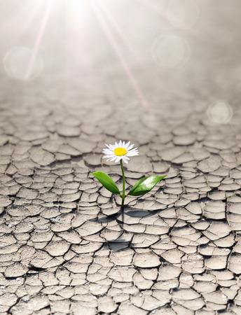 new life in arid land Standard-Bild