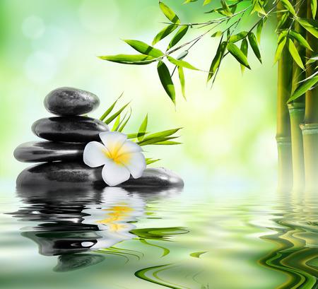 japones bambu: tratamiento de masaje spa en el jardín con frangipani y bambú