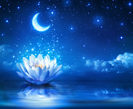 magia: nen�far y la luna en la noche estrellada - Fondo magia Foto de archivo