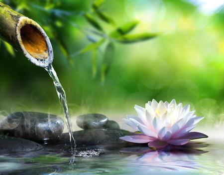 bambou: jardin zen avec des pierres de massage et nénuphar