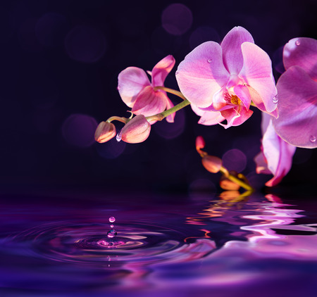 reflexion: orquídeas moradas y las gotas de agua