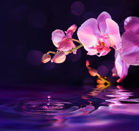 flor morada: orqu�deas moradas y las gotas de agua